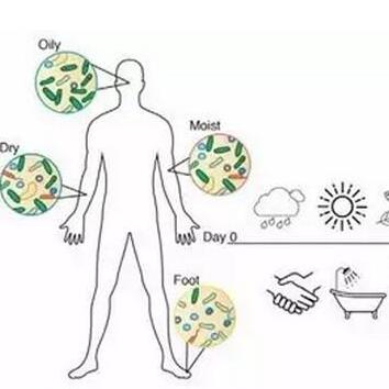 微生态美容(1)----皮肤微生态
