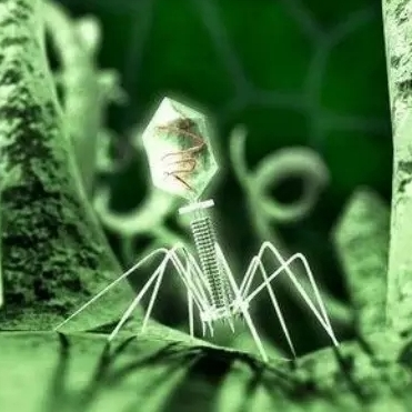 噬菌体-痤疮治疗的新突破