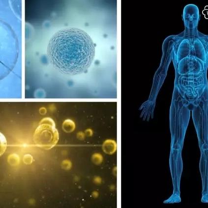 神奇的因子——从细胞因子到九寡肽复合物