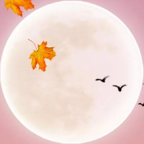 这个中秋,代表月亮宠爱你